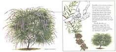 Pruning361