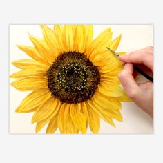 In this tip video then I wanted to show you how I went about painting this Sunflower in my realistic style. Yellows in watercolour can be a challenge. painting easy How to paint a realistic sunflower in watercolour - Anna Mason Art Sunflower Drawing, Watercolor Sunflower, Sunflower Art, Easy Watercolor, Watercolour Tutorials, Watercolour Painting, Diy Painting, Watercolor Flowers, Painting & Drawing