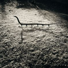Solenoglypha Polipodida from the Fauna series by Joan Fontcuberta and Pere Formiguera, 1987.