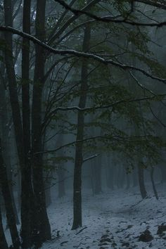 ... in the dead of the night I awoke in a forest, a forest I had never before seen...