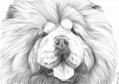Custom Portraits and Animal Drawings by Panimagine Dog Drawings, Animal Drawings, Drawing Sketches, Pencil Drawings, Chow Chow Dogs, Sign Image, Woodburning, Dog Portraits, I Love Dogs