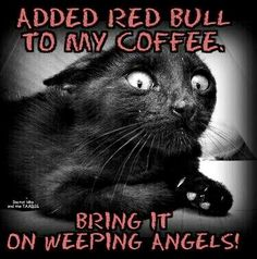 This kitty is ready for the weeping angels