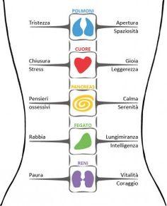 Attorno alla colonna vertebrale si organizza l'intera struttura del corpo. La testa, il torace, le spalle (con le braccia e le mani), il bacino (con le gambe e i piedi), si inseriscono attraverso l'apparato osteo-articolare a vari livelli sulle vertebre: 33-34 segmenti ossei articolati tra loro dai dischi intervertebrali che partendo dall'alto si distinguono in …