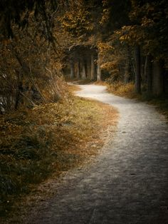 Wherever this is I would love to shoot there! Love the curve of the path, the autumn color and the overhanging trees.