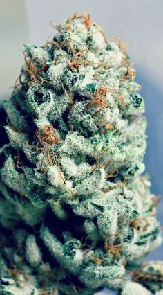 Check Out  LordVaperPens.com  For The Best Vaporizers For Dry Herb, Wax, Concentrates && E-juice (essential oils) Yessss <3