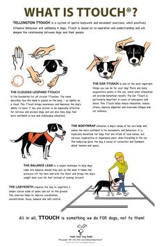 #PetTips T-Touch is an amazing, gentle, powerful and beneficial gift you can use on a rescue or anxious dog...