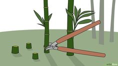 3 Ways to Kill Bamboo - wikiHow Bamboo Stalks, Bamboo Leaves, Garden Yard Ideas, Lawn And Garden, Bamboo Barrier, Goat Fence, Bamboo Landscape, Clumping Bamboo, Privacy Plants