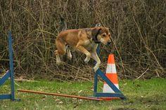 Dog Training Tips & Tools