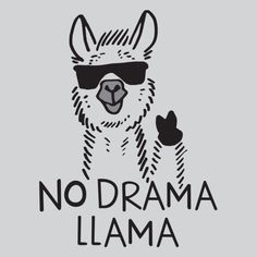 no no drama, no no no no drama