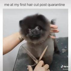Animal Jokes, Funny Animal Memes, Stupid Funny Memes, Funny Animal Videos, Dog Memes, Funny Relatable Memes, Hilarious, Cute Funny Dogs, Cute Funny Animals