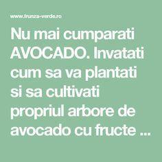Fruit Trees, Permaculture, Avocado, Grape Vines, Home And Garden, Health, Farmer, Diet, Plant