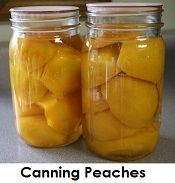 How to can peaches step by step. Recipe includes using honey instead of sugar www.simplycanning.com