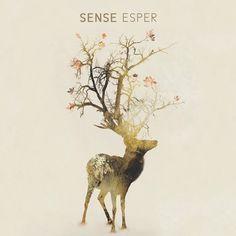 Sense by Ridges