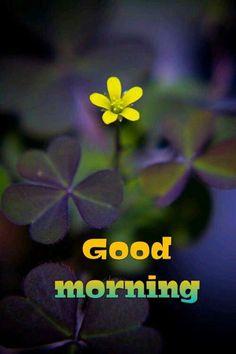 Image or Photo Quotes, Messages, Wishes, News etc Good Morning Post, Good Morning Images, I Think Of You, Beautiful Morning, Photo Quotes, Morning Quotes, Namaste, Wish, Art Photography