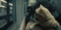 Enzo Montano: Il mio gatto vuole essere poeta – Mario Melèndes