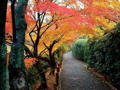 The best way to see any Japanese city is on bike.  Fall in Kyoto...a bit of heaven.