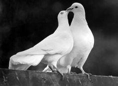 Doves :)