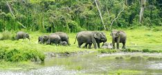 Chapramari Wildlife Sanctuary is close to the Gorumara National Park. #Chapramari is about 30 kilometres from #Chalsa and Lataguri in northern #WestBengal, #India. The total coverage of the forest is 960 hectares. A large variety of flora and fauna are fo