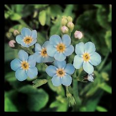 Norwegian wildflowers! User: litelin#visitnorway   #flowers   #norway Likes:: 8  http://instagr.am/p/MvkGCJCzcF/