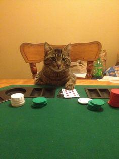 Poker face kitty  http://www.primeslots.com/?AR=526087
