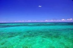 Dry Tortugas- looks gorgeous Florida Keys, South Florida, Places Ive Been, Places To Visit, Dry Tortugas, Looking Gorgeous, Beautiful, Key West, Snorkeling
