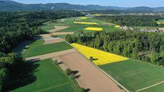 Das Flachland leidet unter der intensiven Landwirtschaft. In den Bergen gehe der Trend in dieselbe Richtung, warnt ein Umweltökonom.