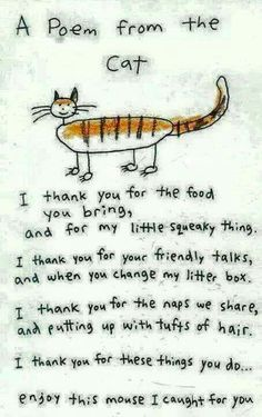 A poem from the cat.