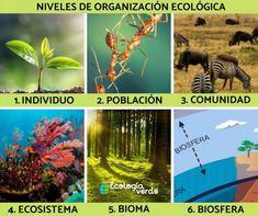 School, Biomes, Marine Ecosystem, Dinosaur Printables, Community, Getting To Know