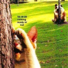 ♥ Hide Bulldog- so silly ♥ Funny Dogs, Funny Animals, Cute Animals, Mundo Animal, My Animal, I Love Cats, Cute Cats, Humor Animal, Bulldog Pics