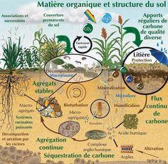 Dans cette conférence, Claude Bourguignon, microbiologiste des sols, ingénieur agronome français, ancien collaborateur de l'INRA et fondateur du LAMS (Laboratoire d'Analyse Microbiologi…