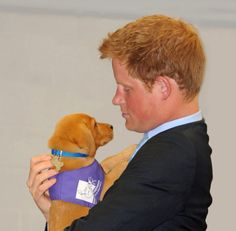 AHHH!! Prince Harry and a puppy. Adorable!!