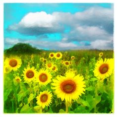 A personal favorite from my Etsy shop https://www.etsy.com/listing/119799199/sunflowers-4x4-wall-art-clouds-today-art
