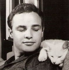 even hot actors love cats.  what's not to love?  now pass the bacon and get lost. #brando #cats