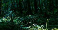 Because so many people have died in the Aokigahara, both in modern and ancient times, there are a number of stories, myths, and legends about it. Here are some of the real facts about Aokigahara Forest. Graveyard Shift, Spooky Stories, Creepy Facts, Alien Worlds, Real Facts, The Weather Channel, Interesting Reads, Our World