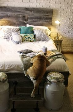 Decoracion Hogar - Decoracion Diy-Manualidades - Comunidad - Google+ haha trust a bulldog to need step tool onto bed!
