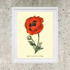 SALE Digital Download   Botanic Garden Red by DigitalBanana Eastern Poppy