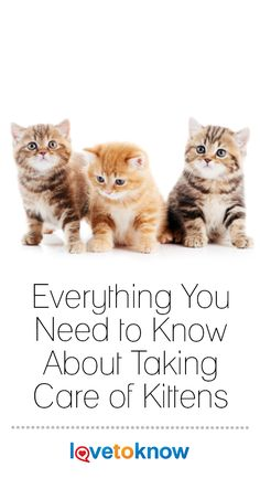 Taking care of kittens is one of the most rewarding jobs on the planet, but you . - Dogs, Cats & Other Pets Kitten Treats, Kitten Food, Kitten Care, Dog Treats, Newborn Kittens, Baby Kittens, Cats And Kittens, Orange Kittens, Cat Care Tips