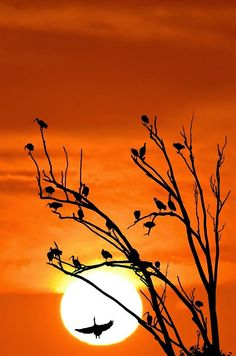 "Birds ~ ""Silhouetted In The Sunset."""