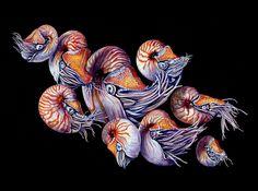 Watercolor and India ink painting by Martha Iserman aka Big Red Sharks Natural World, Natural History, Watercolor Images, India Ink, Ink Painting, Sharks, Big, Illustration, Artist