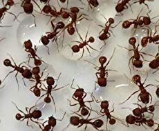 How To Get Rid Of Ants Naturally Ant Farms Ants In Garden Get Rid Of Ants