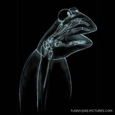Funny X-Ray Photo Images Kermit the Frog