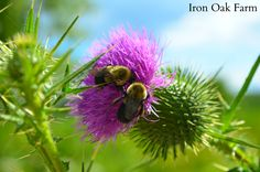 Hives for Pollination and Conservation | About alternative hives that support pollinators of all kinds! | Add a Pollinating Beehive to Any Garden
