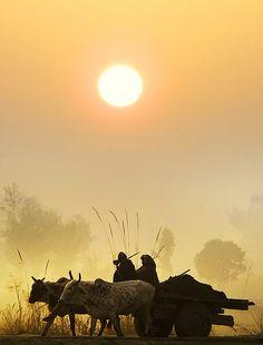 PAKISTAN, Majestic beauty fantastic climate beauty wonderful photography of sunset at rural area of Punjab, Sindh, Pakistan We Are The World, People Of The World, Village Photography, Nature Photography, Punjab Culture, Amazing India, Indian Village, Mellow Yellow, Sunrise