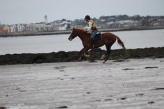 Vladdy riding Sahara at the beach. This is the video of the ride taken on board Sahara. https://www.youtube.com/watch?v=OwA52pQ4eqQ #loveirishhorses #horseforsale