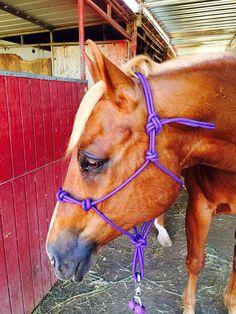 4 Knot Rope Halter, Custom Horse Halter, Hand Tied Rope Halter