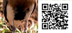 Scan the QR Code to view the answer Bird Watching, Coding, Birds, Bird, Programming