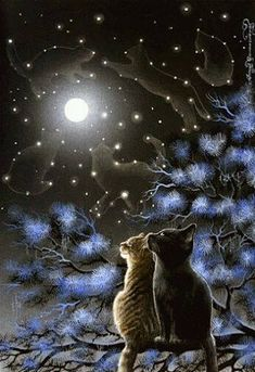 Reminds me of the Warrior cats series cats gazing up at the Star clan in the sky I Love Cats, Crazy Cats, Cute Cats, Cat Embroidery, Animal Gato, Warrior Cats, Cat Drawing, Beautiful Cats, Beautiful Things