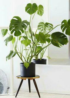 Plante sur tabouret retro