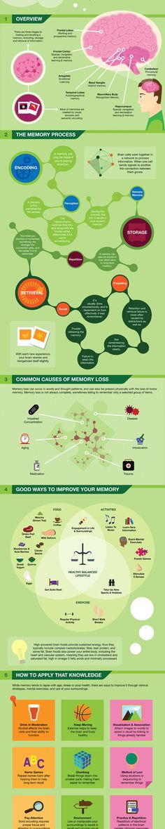 How Memory Works Infographic