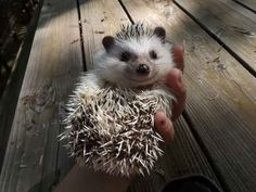 """I'm wearing this knowing smile because I'm the hedgie that sees all. And I see that you're looking like you're going to have a great day."""